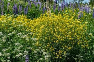 campo de hermosas flores de verano en la luz del sol foto