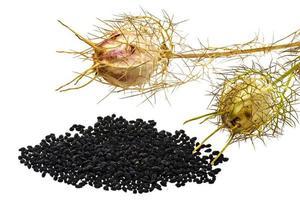 Comino negro con vainas de semillas y hojas, aislado en blanco foto