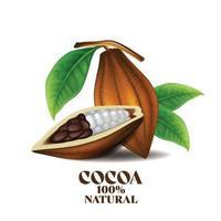 Granos de cacao con hojas verdes ilustración vectorial vector