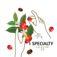Vector illustration of Specialty coffee