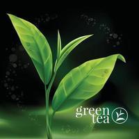 Realistic green tea leaves Vector