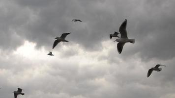 Bandada de gaviotas volando en el oscuro cielo tormentoso video