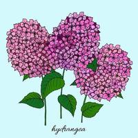Botany flowers. Colorful illustration in the style of coloring. Branch hydrangea. vector
