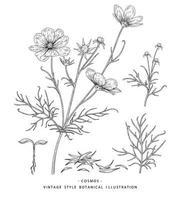bosquejo conjunto decorativo floral. dibujos de flores del cosmos. blanco y negro con arte lineal aislado sobre fondos blancos. ilustraciones botánicas dibujadas a mano. vector de elementos.