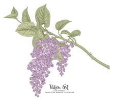 Ilustración de vector de boceto botánico dibujado a mano lila o syringa