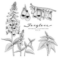 Sketch Floral decorative set. Foxglove flower drawings. Black and white with line art isolated on white backgrounds. Hand Drawn Botanical Illustrations. Elements vector. vector