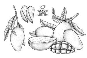 Set of mango fruit hand drawn elements botanical illustration vector