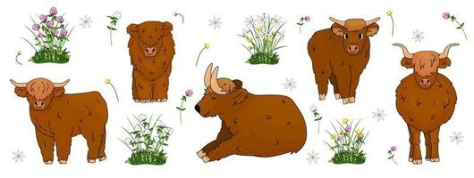 Set of hand drawn small and big highland brown cows, which are sitting, standing, lying on the ground with flowers, meadow clover, buttercup, daffodils vector