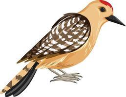 pájaro carpintero de gila en estilo de dibujos animados aislado sobre fondo blanco vector
