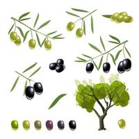 Vector set of twigs with green and black olives