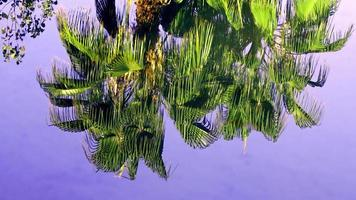 Tree Reflection on Lake Water video