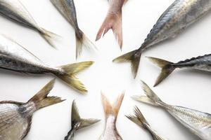 Top view fish tails in a circle photo
