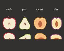 frutas mitades manzana, pera, albaricoque, ciruela. ilustración vectorial vector