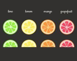 Fruits slices. Lime, lemon, orange, grapefruit. Vector illustration