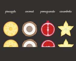 Fruits slices. Pineapple, coconut, pomegranate, carambola. Vector illustration