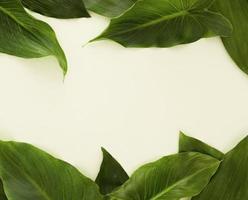 vista superior de muchas hojas con espacio de copia foto