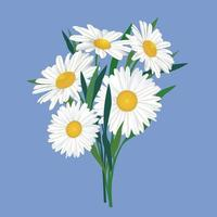 Flower chamomile bouquet. Floral frame. Flourish greeting card design. Blooming meagow white flowers isolated on light green summer background vector