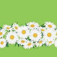 Flower chamomile garland seamless pattern.  Floral bouquet border frame. Flourish greeting card design. Blooming meagow white flowers isolated on light green summer background vector