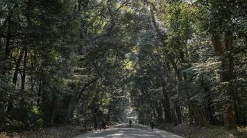 People commuting by walking on outdoor forest path photo