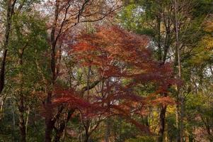 Tree canopy in autumn photo