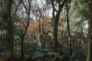 dosel de los árboles del bosque foto