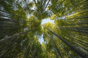 dosel de los árboles en el bosque foto
