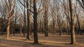Bare trees in the winter photo