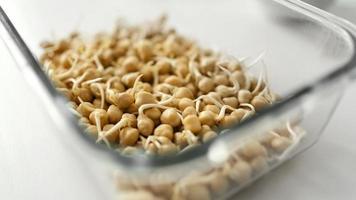semillas en florero foto