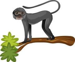 Animal cartoon character of Spider monkey on white background vector