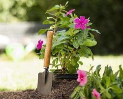 Plants gardening tools close up photo
