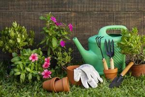 maceta de plantas con regadera foto