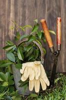 herramientas de jardín afuera foto
