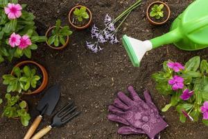 Gardening tools frame photo