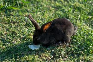 fluffy rabbits grazing on the lawn photo