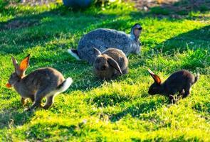 Un montón de conejos de colores con pelo esponjoso sentado sobre la hierba verde en la pradera foto
