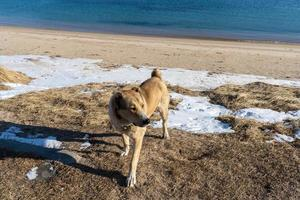 retrato de un perro en el fondo de la orilla del mar foto