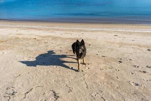 retrato, de, un, perro negro, en, un, playa, plano de fondo foto