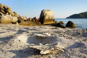 paisaje con una playa con una estrella de mar en la arena. foto