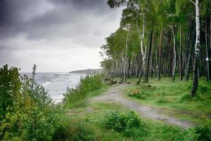 Birch grove on the shore of the grey stormy Baltic sea photo