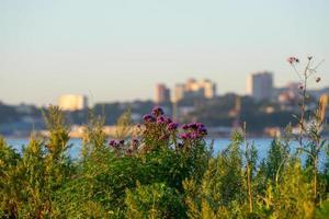 plantas y flores sobre un fondo borroso del paisaje urbano foto