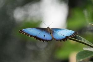 mariposa sentada en ramas verdes en el invernadero foto