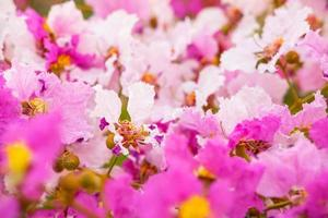 Colorful flower and fiower background photo