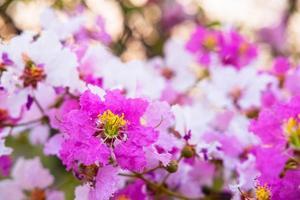 Fondo de flores y flores de colores foto