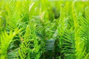 Fern garden and fern tree background photo