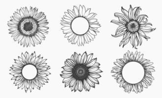bosquejo del conjunto de girasol. contorno dibujado a mano. ilustración vectorial. vector