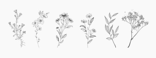conjunto de flores silvestres. estilo de dibujo. vector