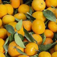 naranjas recién cosechadas foto