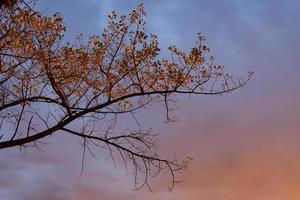 fondo con ramas de árboles y hojas de otoño foto