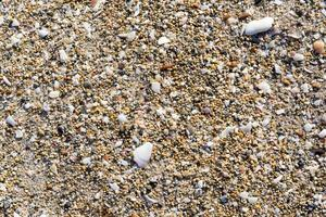 Abstract background with fine texture of stones and shells photo