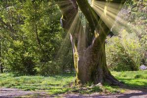 paisaje natural con vistas a la vegetación y un gran árbol foto